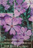 Гераниум Tuberosum 5+ 10бр.