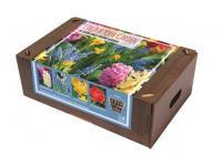 Цветна градина - градина в ярки цветове 50бр.
