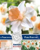 NEW BULB Нарцис TRUMPET PARK PERFUME 14/16