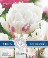 NEW BULB Лале DOUBLE ICE WONDER 11/+  8бр.