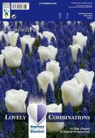 Комбинация бели лалета и сини мускари 35 бр.