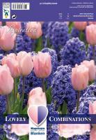 Комбинация син зюмбюл/розово лале 15бр.