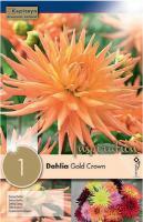 Далия кактус Gold Crown 1 бр.