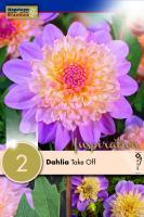 Далия anemone Take off 2 бр.