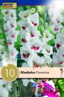 Гладиоли Fiorentina 10бр.