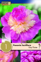 Божур - Paeonia Lactiflora Gay Paree 1 бр.