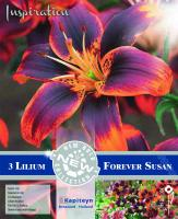 NEW bulbs Лилиум азиатик Forever Susan 3бр. 16/18