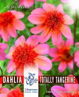 NEW bulbs Далия Totally Tangerine 3бр.