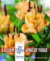 NEW bulbs Лилиум азиатик Apricot Fudge 3бр. 16/18
