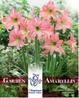 NEW bulbs Амарилис градински Pink Pascal 2 бр.