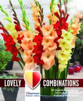 Комбинация - Гладиоли червен, оранжев и жълт 25 бр.