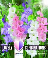 Комбинация - Гладиоли бял, син и розов 25 бр.