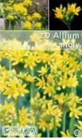 Алиум moly жълт