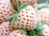 Бяла ягода Strawberry White Dream
